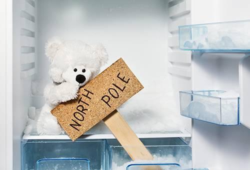 Teddy ijsbeer vriezer