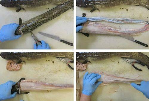étapes de nettoyage du poisson 2
