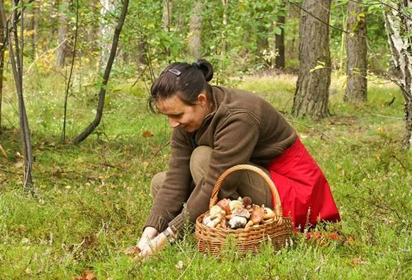 Cueillette de champignons en forêt