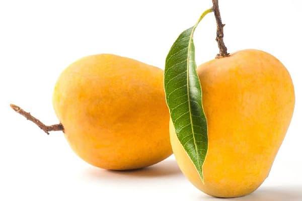 Mangue kesar