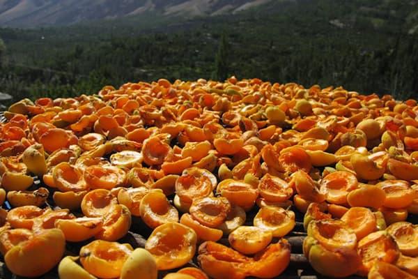 Séchage des abricots à l'extérieur