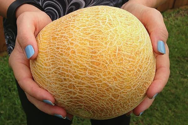 Melon dans les mains