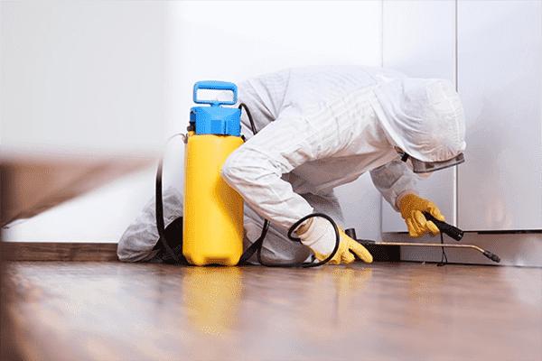 Disinfector traite l'appartement des cafards