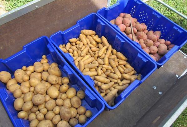 Kratten Aardappelen