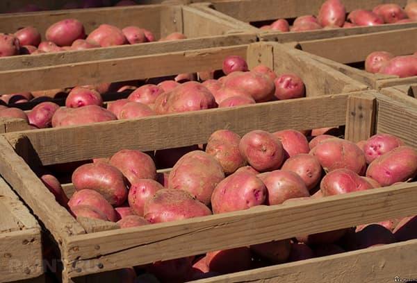 Gewassen Aardappelen