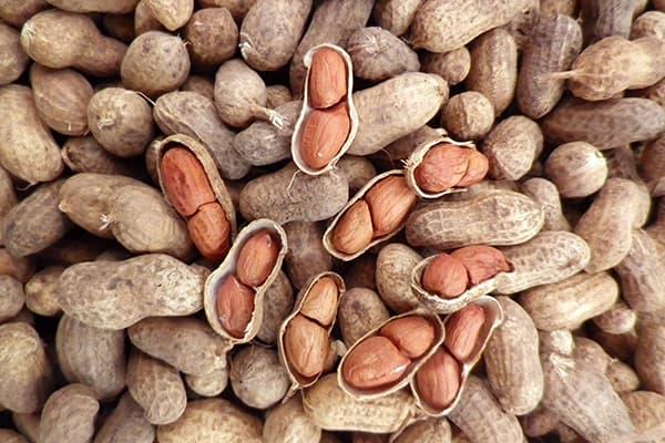 Cacahuètes fraîches
